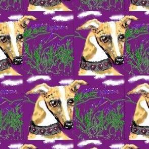 Lavender_whippet2_Purple