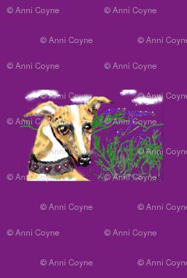 Lavender_whippet2_Purple-for_collars