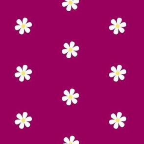 Magenta Daisy Dots