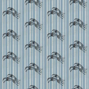 greyhounds, light blue