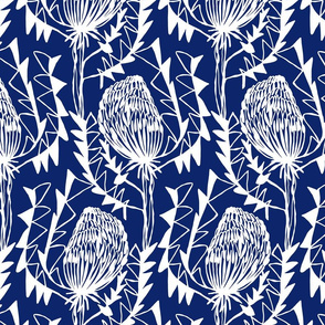 BIRDS_NEST_BANKSIA_2BLUE-SF