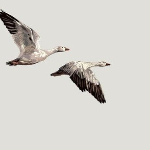 Arctic Snow Geese - Light Gray - Medium Scale