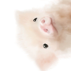 Wittle pig - Close up