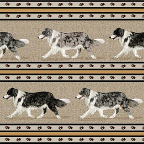 4 Colors of Border Collie Stripe