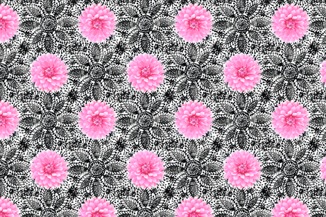 Rustic_pink_Dahlia_black_lace_white fabric by helenpdesigns on Spoonflower - custom fabric