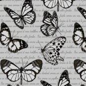 Papillon_3_shop_thumb