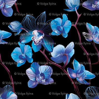 Orchid Blue and Black
