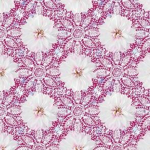 Rustic white Dahlia on white lace (magenta)