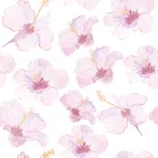 Hibiscus-01