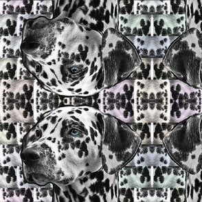 dalmation illusions