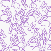 purple bunnies purple rabbits purple bunny rabbit
