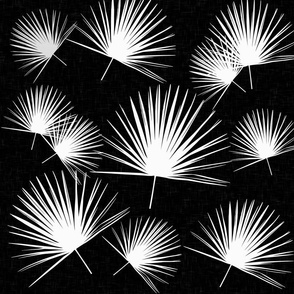 fan palmetto in white on black palm leaf palm tree palm frond