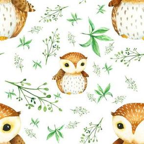 Dear OWL