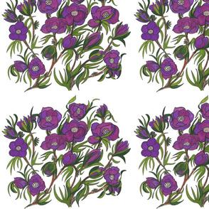 62 Purple Flowering Begonias