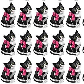black_cat_pink_bow