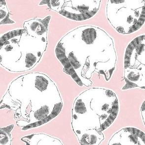 Pink Sleepy Kitties