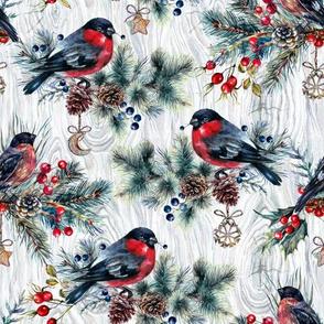 Winter - Birds