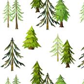 Pine Tree Forest - Woodland Trees B