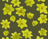 Small-yellow-flowers-dark_thumb