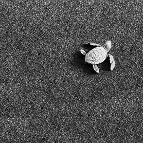 Sea Turtle in Sand