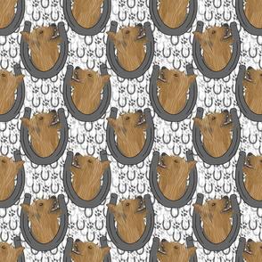 Silky Terrier horseshoe portraits