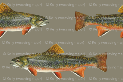 brook trout on pewter grey