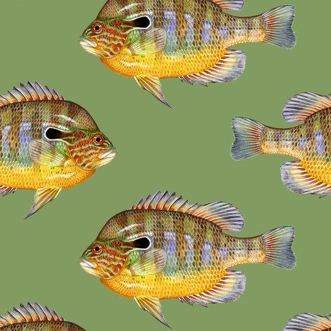 R0-0-longear-sunfish-on-829b61-vintage-green_shop_preview