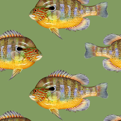 longear sunfish on vintage green fabric by weavingmajor on Spoonflower - custom fabric