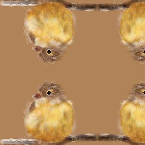 My Chickadee