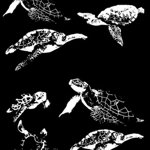 Turtles: Black and White