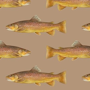 brown trout on warm tan