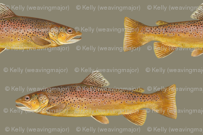brown trout on pewter grey