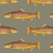 R0-0-brown-trout-on-898470-pewter_shop_thumb