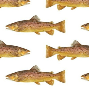 brown trout on white