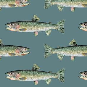 cutthroat trout on slate blue