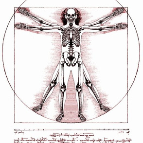 5 Vitruvian Man skeleton Leonardo da Vinci classical Renaissance anatomy anatomical studies portraits ratios sepia antique nude naked architecture nudity circles squares body proportions mathematics art