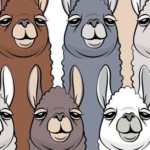 (jumbo scale) llamas