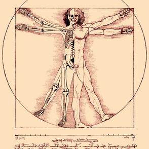 3 uncensored Vitruvian Man Leonardo da Vinci classical Renaissance anatomy anatomical studies portraits sepia antique nude naked half skeleton skulls ratios brown architecture nudity circles squares body proportions mathematics art