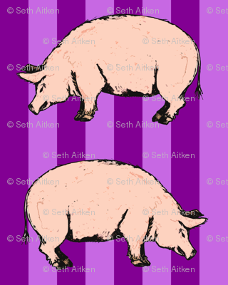 purple pigs