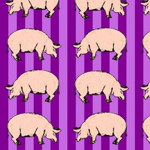 purple pigs