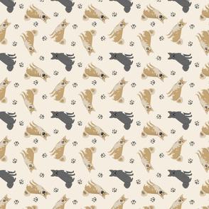 Tiny Norwegian Buhunds - tan