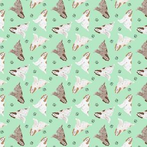 Tiny Spinone Italiano - green