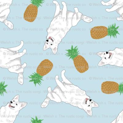 Tiny White Shepherd dogs - pineapples