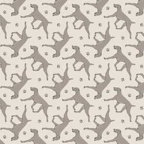 Trotting Weimaraner and paw prints - beige