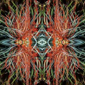 Draco Tree Kaleidoscope