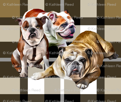 Plaid Background Bulldog Family