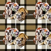 Rrrbulldog-family-plaid_shop_thumb