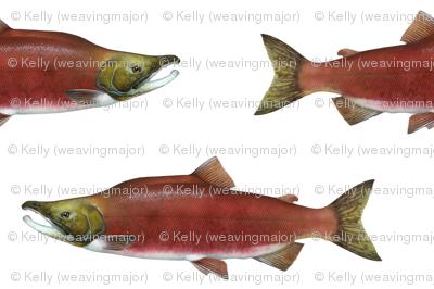 sockeye salmon on white