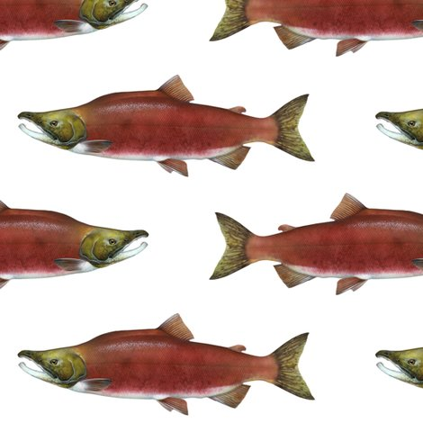Sockeye_salmon_on_white_fix_shop_preview