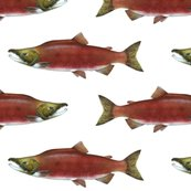 Sockeye_salmon_on_white_fix_shop_thumb
